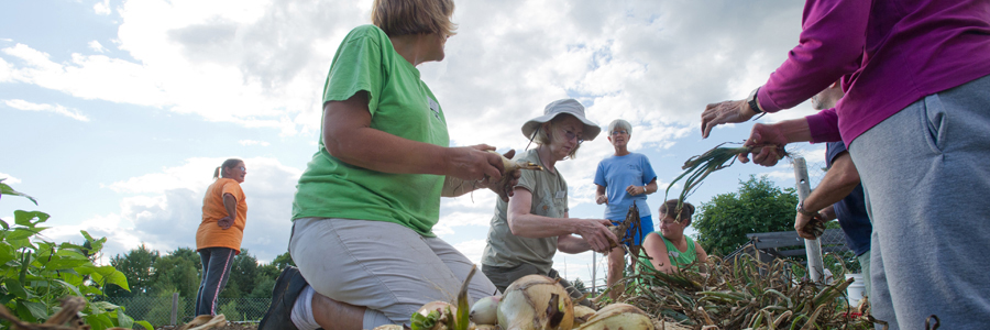 Cooperative Extension: Maine Harvest for Hunger